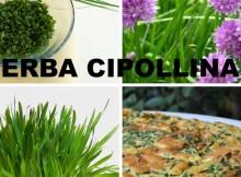 Come Coltivare l' Erba Cipollina