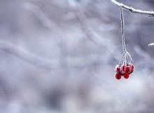 come proteggere le piante dal freddo