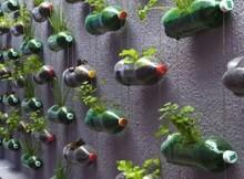 giardino-verticale-bottiglie-di-plastica